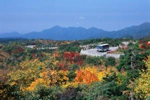 【弥陀ヶ原】黄と赤のコントラストが美しい紅葉シーズン。見ごろは9月下旬ごろ。